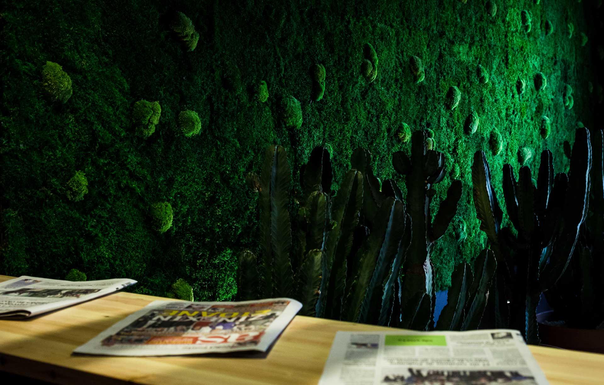 Fotografia Interiores Ginger Fizz Zaragoza cactus