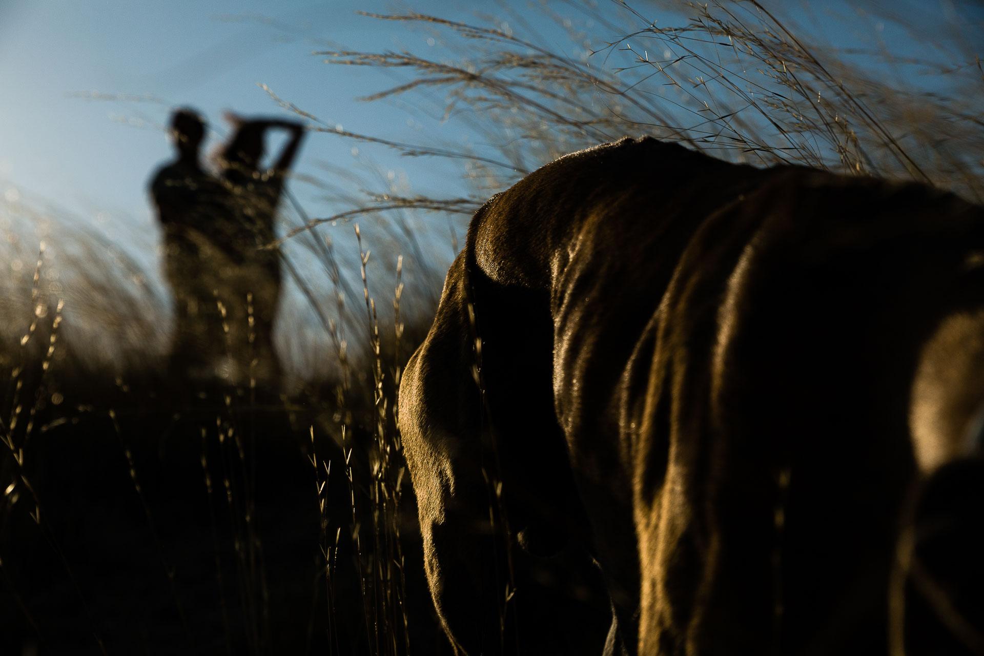 Fotografia preboda Calatayud con Mascotas